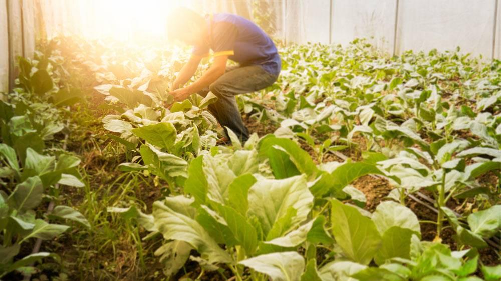 Com a produção agrícola de alimentos para a merenda escolar, o agricultor familiar pode conquistar contratos de até R$ 60 mil/ano junto ao poder público, com garantias de demanda e preços de mercado.