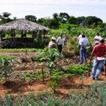Agricultura familiar: colhe mais quem aprende a plantar