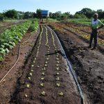 Maracaju Forte no Campo: potencializando a agricultura familiar