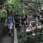 Consultoria de turismo: ferramenta essencial para crescer